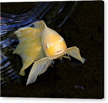 Canvas Print featuring the photograph Angel Koi by Mariarosa Rockefeller