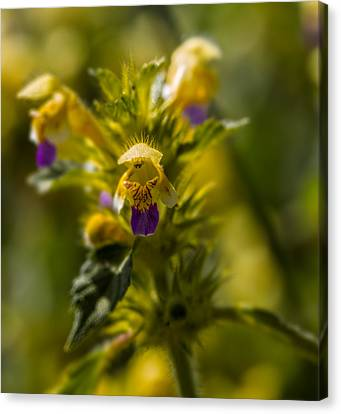 Canvas Print featuring the photograph Angel? by Leif Sohlman