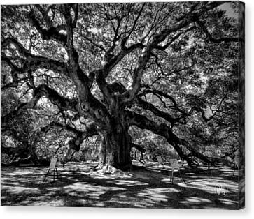 Angel Oak 002 Canvas Print by Lance Vaughn