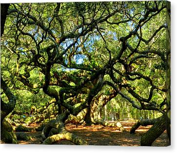 Angel Oak 006 Canvas Print by Lance Vaughn