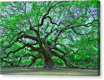 Angel Oak Canvas Print by Allen Beatty