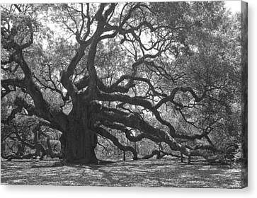Angel Oak II - Black And White Canvas Print