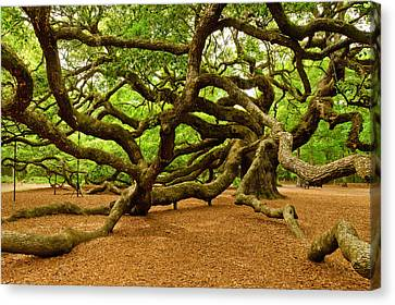 Angel Oak Tree Branches Canvas Print by Louis Dallara