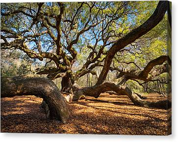 Angel Oak Tree Charleston Sc Canvas Print by Dave Allen