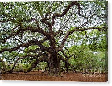 Canvas Print featuring the photograph Angel Oak Tree by Dale Powell