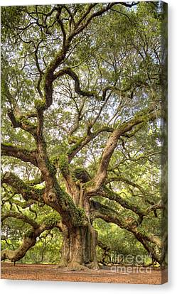 Live Oaks Canvas Print - Angel Oak Tree Johns Island Sc by Dustin K Ryan