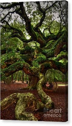 Angel Oak Tree Canvas Print by Kathleen Struckle