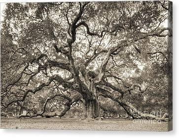 Live Oaks Canvas Print - Angel Oak Tree Of Life Sepia by Dustin K Ryan