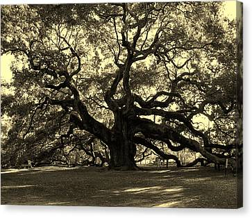 Angel Oak Tree Sepia Canvas Print by Susanne Van Hulst