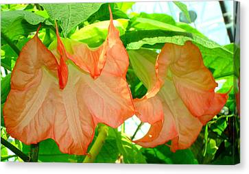 Canvas Print featuring the photograph Angel Trumpet  by Kay Gilley