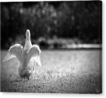 Angel Unaware Canvas Print by Kimberly Danner