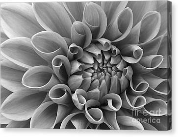 Angelini Photography Canvas Print