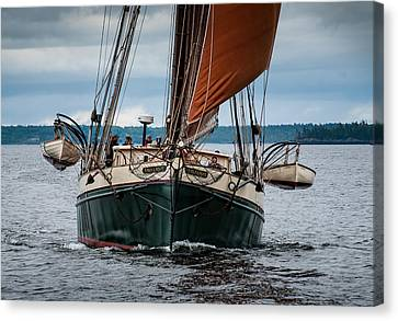 Angelique Bow On Canvas Print by Fred LeBlanc