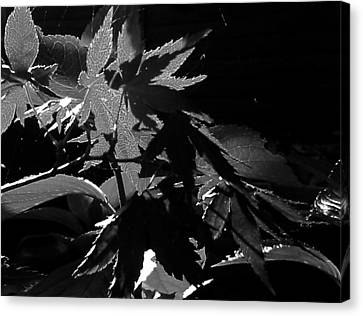 Canvas Print featuring the photograph Angels Or Dragons B/w by Martin Howard