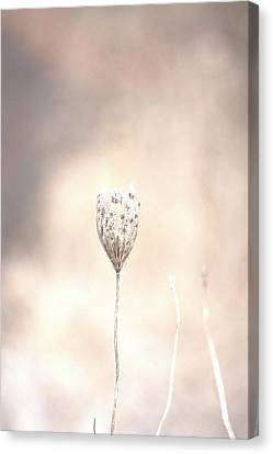 Canvas Print featuring the photograph Angel's Touch by The Art Of Marilyn Ridoutt-Greene