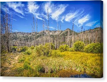 Angora Creek Restoration Canvas Print by LeeAnn McLaneGoetz McLaneGoetzStudioLLCcom