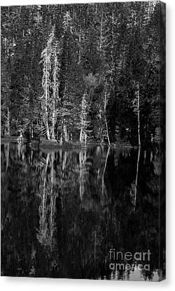 Angora Lake Canvas Print by Misty Tienken