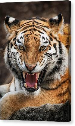 Pittsburgh Zoo Canvas Print - Angry Cat by Emmanuel Panagiotakis