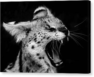 Angry Wild Serval Cat Canvas Print