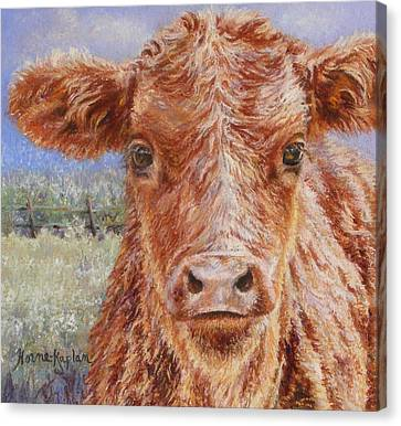 Angus Calf Norman IIi Canvas Print