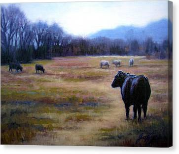 Angus Steer In Franklin Tn Canvas Print by Janet King