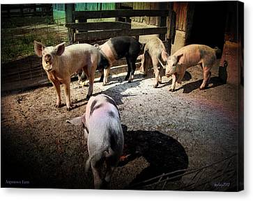 Angustown Piggies Canvas Print by Cynthia Lassiter