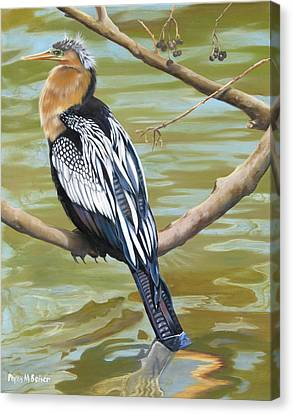 Anhinga Perched Canvas Print by Phyllis Beiser