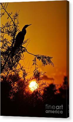 Anhinga Sunset Canvas Print by Lynda Dawson-Youngclaus