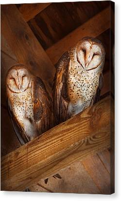 Hdr Look Canvas Print - Animal - Bird - A Couple Of Barn Owls by Mike Savad