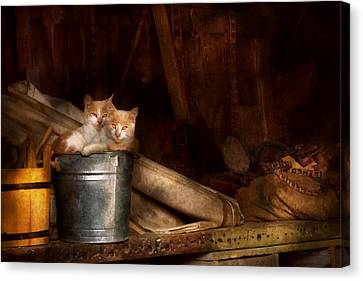 Animal - Cat - Bucket Of Fun  Canvas Print by Mike Savad