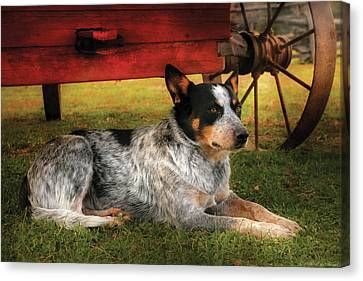 Personalized Canvas Print - Animal - Dog - Always Faithful by Mike Savad