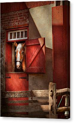 Animal - Horse - Calvins House  Canvas Print by Mike Savad