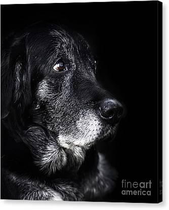 Animal - Old Dog Canvas Print by Mythja  Photography