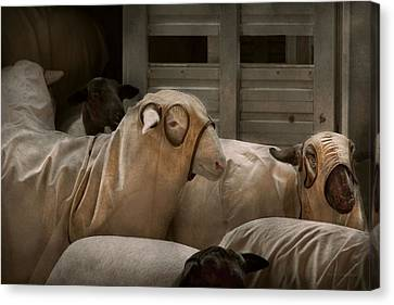 Animal - Sheep - The Order Canvas Print by Mike Savad