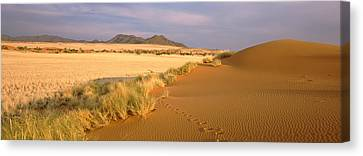 Animal Tracks On The Sand Dunes Towards Canvas Print by Panoramic Images