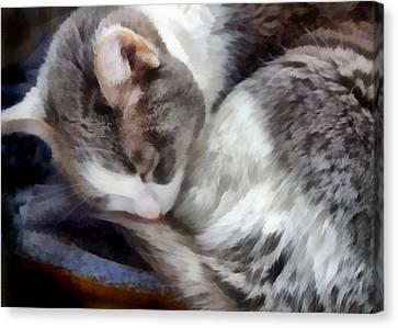 animals - cats - Cat Nap Canvas Print
