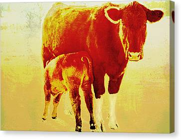 Animals Cow And Calf Canvas Print by Ann Powell