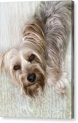 animals - dogs - Rascal Canvas Print by Ann Powell
