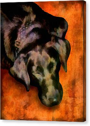 animals- dogs Sleeping Dog Canvas Print by Ann Powell