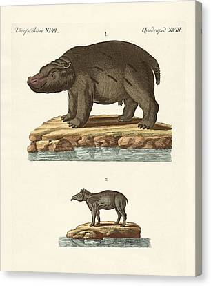 Animals From Hot Countries Canvas Print by Splendid Art Prints