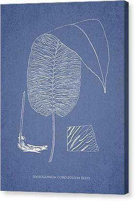 Anisogonium Cordifolium Canvas Print by Aged Pixel