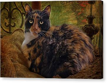 Annabelle Canvas Print by Larry Marshall