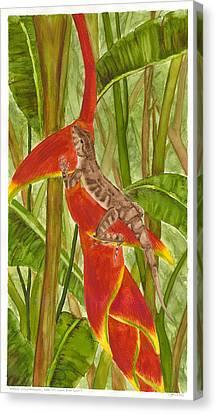Anolis Humilis Canvas Print by Cindy Hitchcock