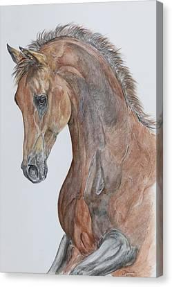 Another  Arabian Horse Canvas Print by Janina  Suuronen