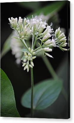 Borinquen Scene Canvas Print - Another Beautiful Small Flower by Penelope  Griffin-Rosado