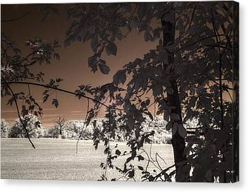 Another Blasted Tree Canvas Print