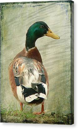 Another Duck ... Canvas Print by Chris Armytage