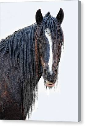 Another Horse With No Name Canvas Print