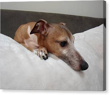Another Relaxing Day - Italian Greyhound  Canvas Print by Santos Arellano