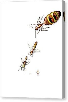 Ant Castes Canvas Print by Claus Lunau